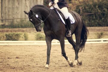 black_dressage_by_underthunderphotos-d4xur1j